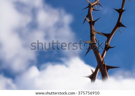 Thorns on the sky. - stock photo