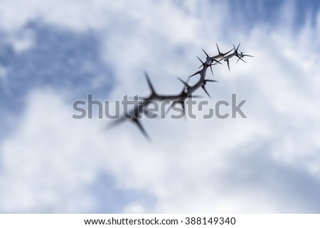 Thorns on the sky 4. - stock photo