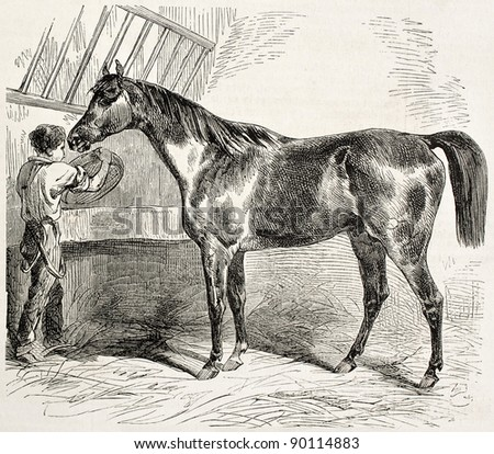 Thoroughbred English horse old illustration. By unidentified author, published on L'Illustration, Journal Universel, Paris, 1858 - stock photo