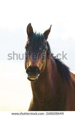 thoroughbred horse - stock photo
