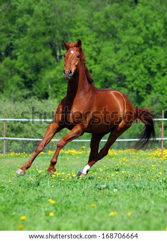 Thoroughbred horse in stud  - stock photo