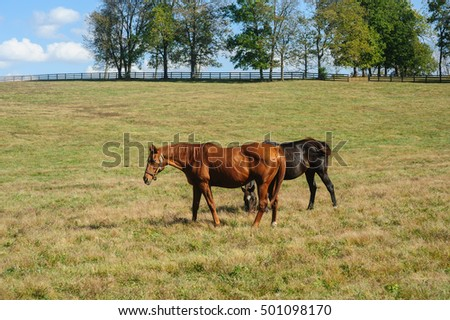 Thoroughbreds grazing in the pasture
