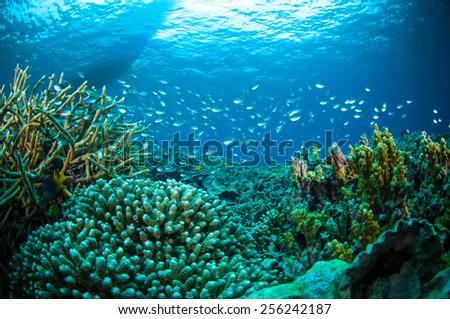 thousand fish below boat bunaken sulawesi indonesia underwater photo