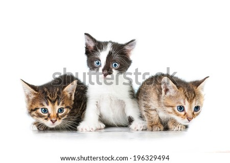 stock-photo-three-adorable-little-kitten