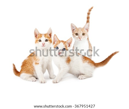 Three adorable young orange and white kittens sitting together over white background