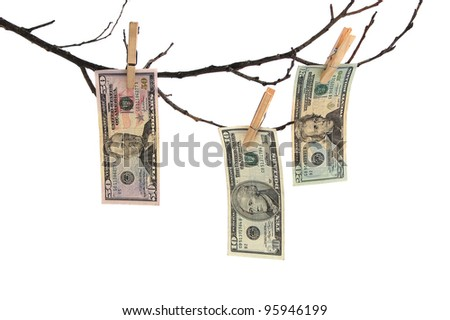 three banknotes of dollar on branch - stock photo