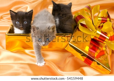 three beautiful fluffy little kittens,in gold box-gift on gold background-cloth