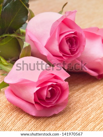 Three beautiful fresh roses on textile