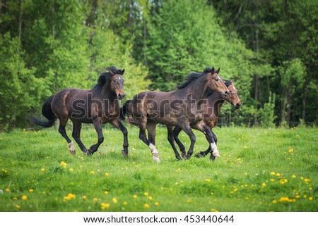 Three beautiful horses running on the field in summer