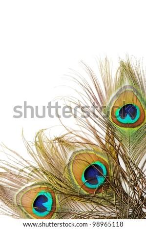 Three Beautiful peacock feathers, close up , micro shot - stock photo