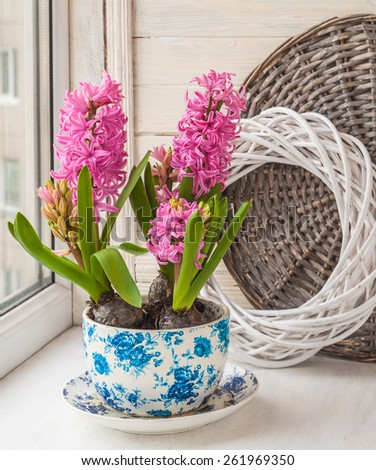 Three beautiful pink hyacinth in a pot with a vintage pattern on the window - stock photo