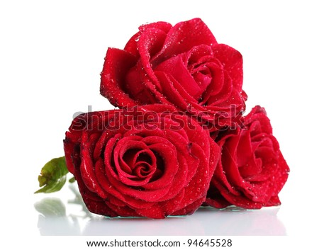 three beautiful red roses isolated on white - stock photo