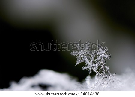 three beautiful snow crystals in winter large view - stock photo