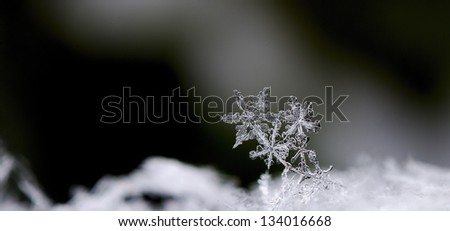 three beautiful snow crystals in winter panorama - stock photo