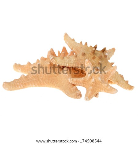 Three beautiful starfish of different sizes on a white background/Sea star - stock photo