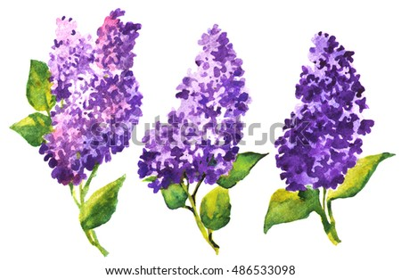 Three beautiful watercolor purple lilac branch. Bright hand drawing flower illustration for invitations, cards, greetings, wedding on white backdrop.