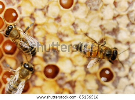 Three bees on the honeycomb surface.
