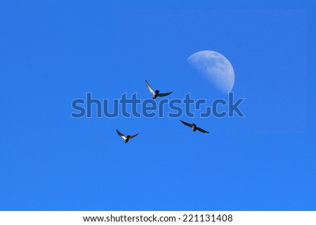 Three birds with blue sky and moon. - stock photo