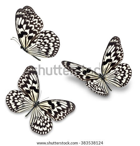 Three black and white butterfly, isolated on white background - stock photo