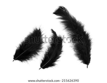 Three black feathers isolated on white - stock photo
