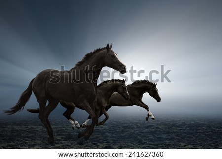 Three black horses running on field, bright light shines through fog - stock photo
