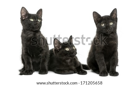 Three Black kittens looking away, 2 months old, isolated on white
