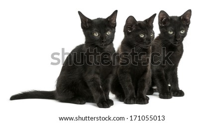 Three Black kittens sitting, 2 months old, isolated on white