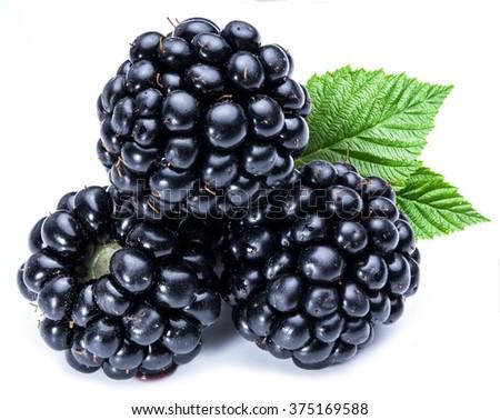 Three blackberries on the white background. - stock photo