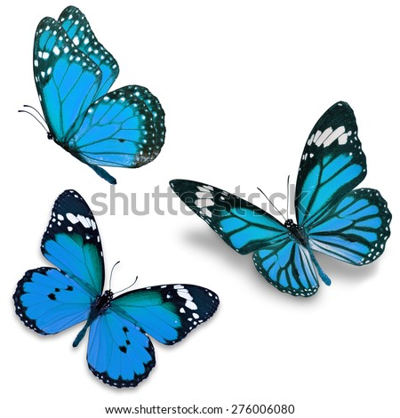 Three blue butterfly, isolated on white background - stock photo