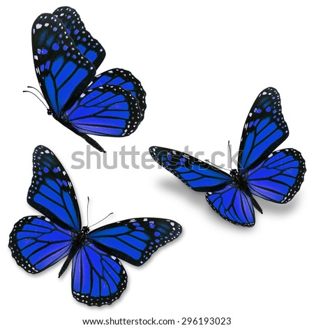 Three blue monarch butterfly, isolated on white background