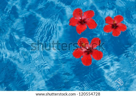 Three bright red flowers floating in clear blue water, with copy space - stock photo