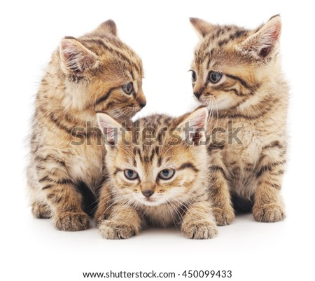 Three brown cats isolated on a white background.