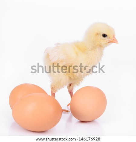three brown eggs and newborn yellow chicken isolated on a white background