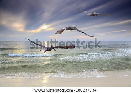 Three Brown Pelicans Fly Out to Sea at Sunset - stock photo