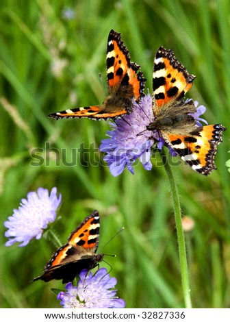 Three butterflies on a flowers - stock photo