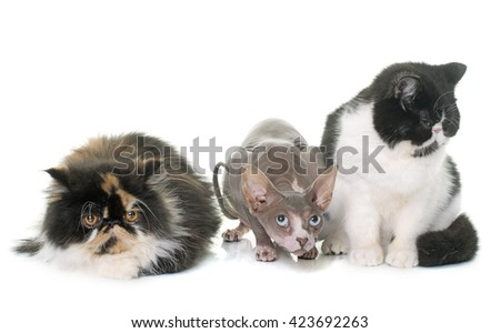 three cats in front of white background