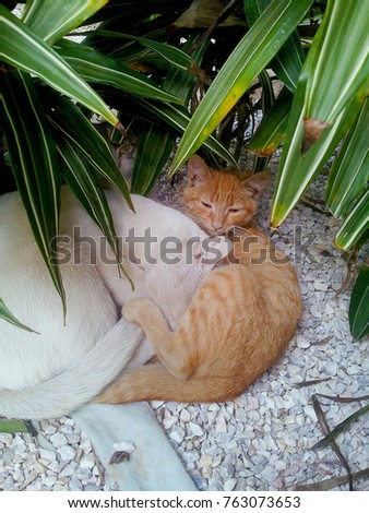 Three cats under leaves of croton