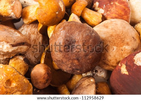 Three ceps isolated on white background