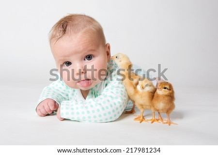 Three chicks and a cute little newborn baby with tongue out of mouth.  - stock photo