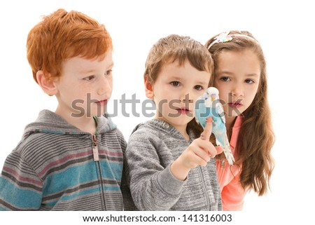 Three children with tame pet budgerigar sitting on hand. Isolated on white.
