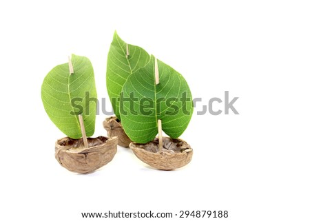 three cockleshell from a walnut shell with sails on a bright background - stock photo