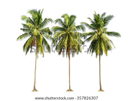 Three coconut palm trees isolated on white background.