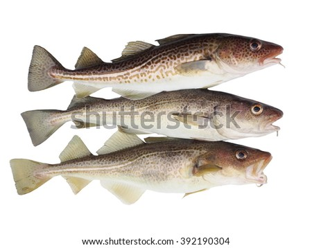 three codfish on a white background - stock photo