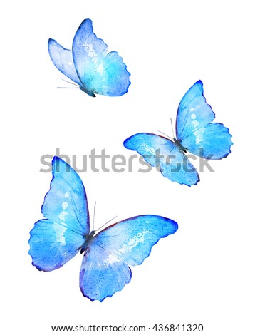 Three color watercolor butterflies, isolated on white background  - stock photo