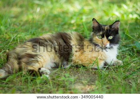 Three colored cat laying in shady place in the summer grass - stock photo