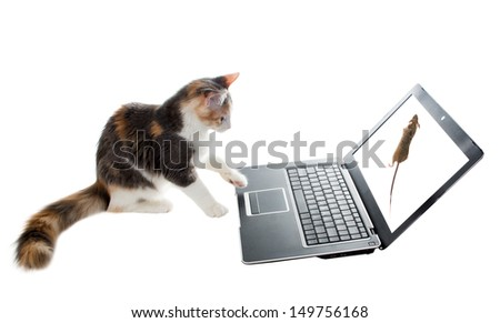 Three-colored cat watching a mouse on a laptop screen - stock photo