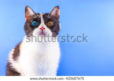 three-colored cute kitten - stock photo