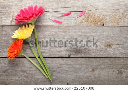 Three colorful gerbera flowers on wooden table with copy space - stock photo