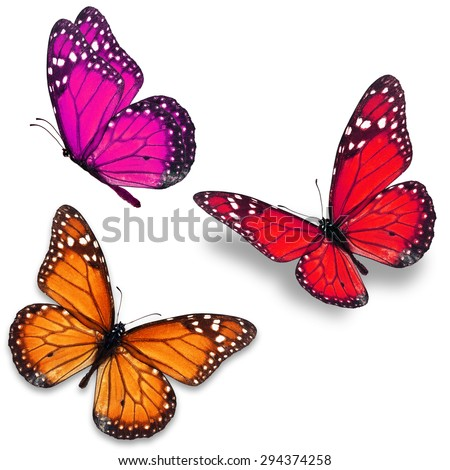 Three colorful monarch butterfly isolated on white background