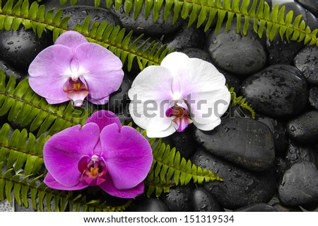 Three colorful orchid and green fern on black stones